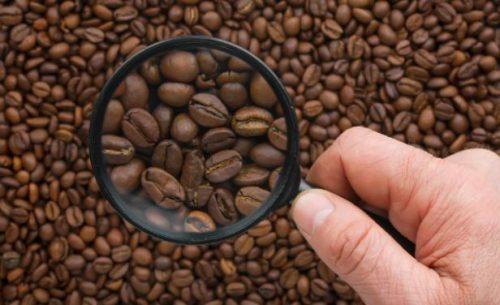 propiedades de la cafeina